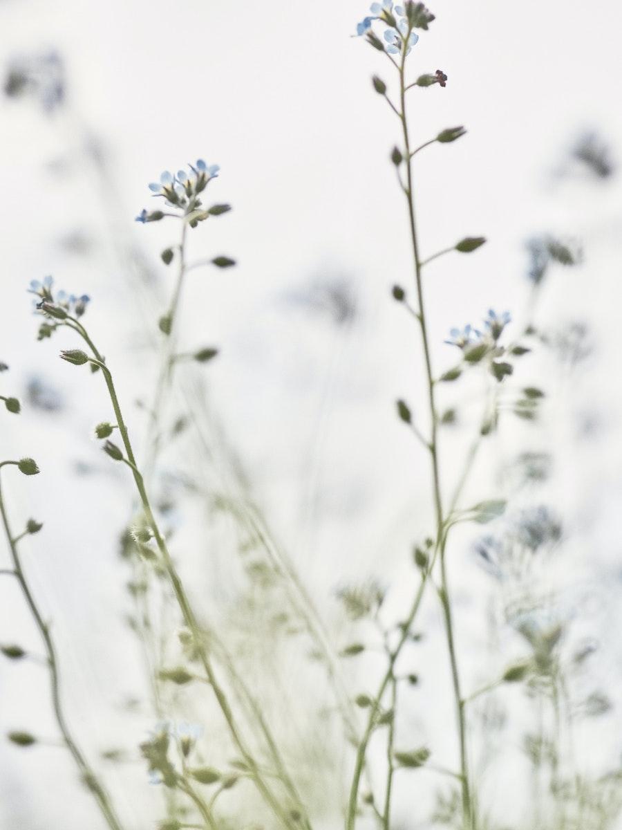 rudolph care anti ageing serum